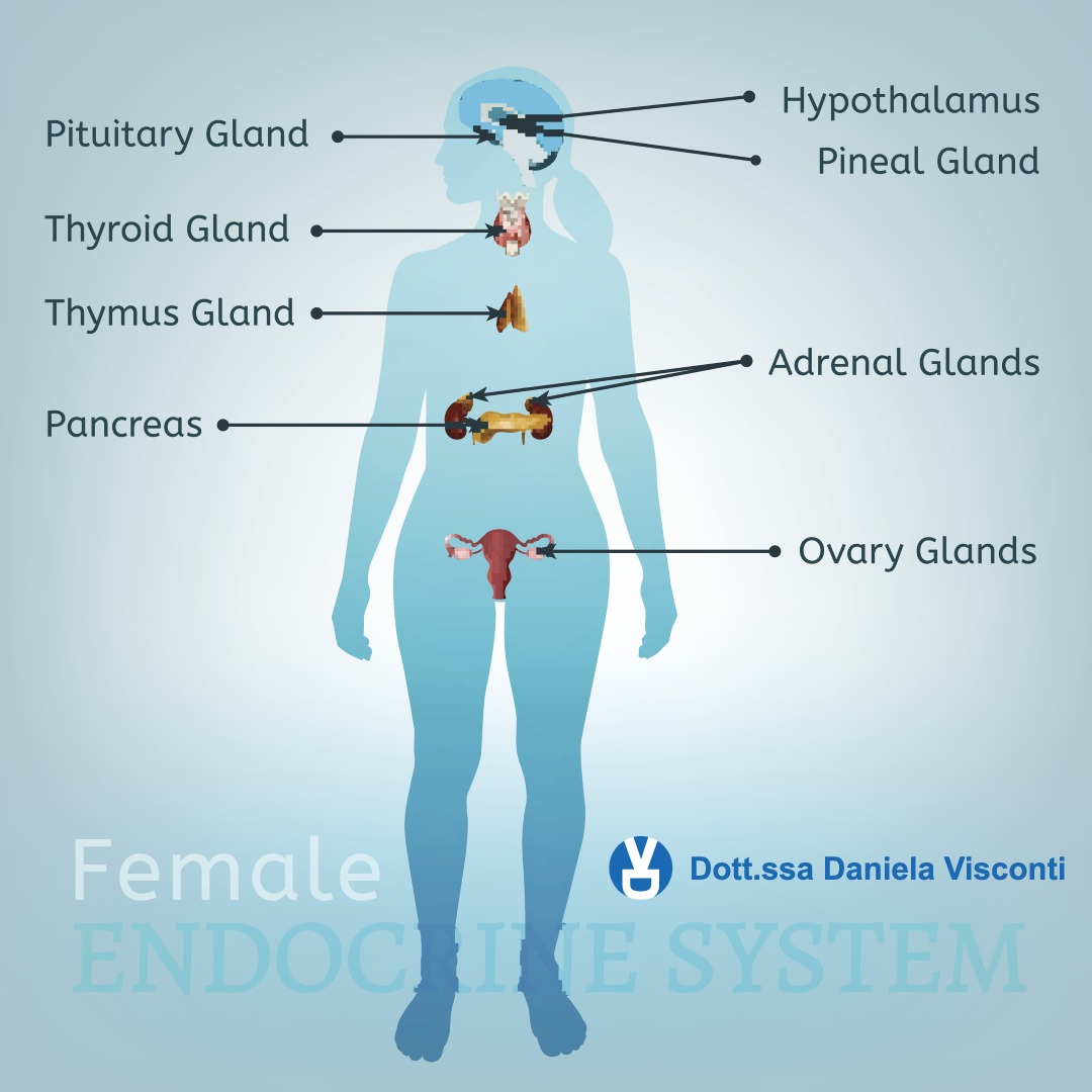 endocrinologia, endocrinologo e sistema endocrino